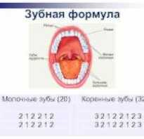 Формула зубов взрослого человека