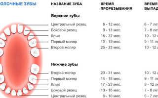 Сколько должно быть зубов у взрослого человека