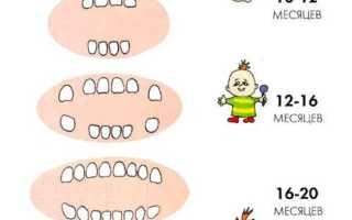 Очередность прорезывания зубов у ребенка