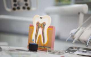 Внешнее и внутреннее строение зубов человека