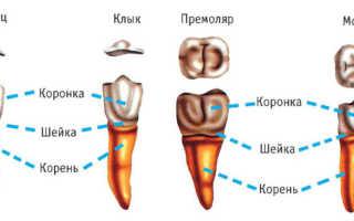 Удаление корня разрушенного зуба